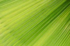 Fondo verde de la hoja Fotos de archivo
