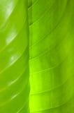 Fondo verde de la hoja Imágenes de archivo libres de regalías