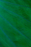 Fondo verde de la hoja Fotografía de archivo