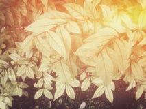 Fondo verde de la hoja Fotografía de archivo libre de regalías