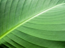 Fondo verde de la hoja Imagen de archivo