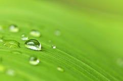 Fondo verde de la hoja con las gotas de agua Imagenes de archivo
