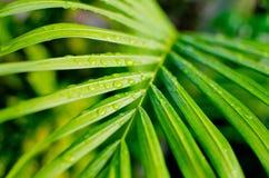 Fondo verde de la hoja de la naturaleza con el descenso del agua Fotografía de archivo libre de regalías