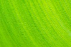 Fondo verde de la macro de la hoja Fotografía de archivo