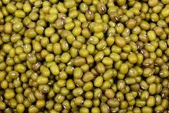 Fondo verde de la macro de las alubias secas Imagen de archivo libre de regalías
