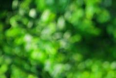 Fondo verde de la naturaleza Imagen de archivo