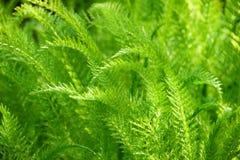 Fondo verde de la naturaleza Imagenes de archivo