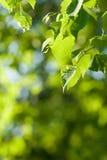Fondo verde de la naturaleza Fotos de archivo