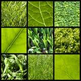 Fondo verde de la naturaleza - collage Imágenes de archivo libres de regalías