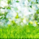 Fondo verde de la naturaleza con la hierba Fotos de archivo