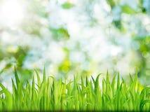 Fondo verde de la naturaleza con la hierba Fotografía de archivo libre de regalías