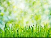 Fondo verde de la naturaleza con la hierba Imágenes de archivo libres de regalías