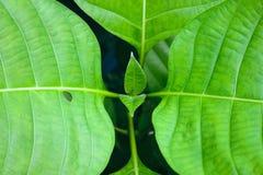 Fondo verde de la naturaleza de la planta del primer de la hoja Fotografía de archivo