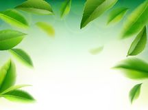 Fondo verde de la naturaleza del vector de las hojas de té stock de ilustración
