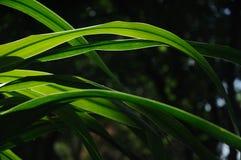 Fondo verde de la oscuridad de la hoja Foto de archivo libre de regalías