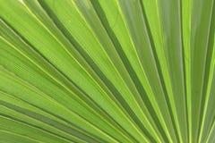 Fondo verde de la palma Imagen de archivo libre de regalías