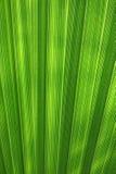 Fondo verde de la palma de la hoja Fotografía de archivo
