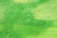 Fondo verde de la pared Fotos de archivo
