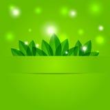 Fondo verde de la primavera con los pétalos Foto de archivo