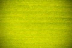 Fondo verde de la textura de la hoja del plátano Fotos de archivo
