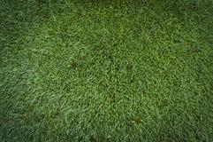 Fondo verde de la textura del musgo del bosque del verano Imagenes de archivo
