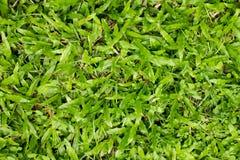 Fondo verde de la yarda Imagen de archivo