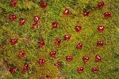 Fondo verde de las tarjetas del día de San Valentín del bosque imagenes de archivo
