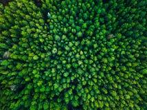 Fondo verde de los árboles en Lituania, Europa Fotografía de archivo libre de regalías