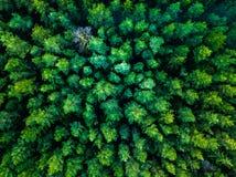 Fondo verde de los árboles en Lituania, Europa Foto de archivo