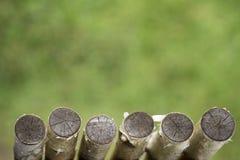 Fondo verde dei tronchi di albero della betulla fotografia stock libera da diritti