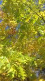 Fondo verde del ¿ del €ðŸŒ del  del ðŸ delle foglie Fotografie Stock Libere da Diritti