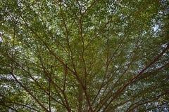 Fondo verde del árbol Fotografía de archivo libre de regalías