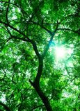 Fondo verde del árbol Imagen de archivo