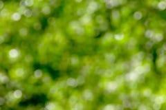 Fondo verde del bokeh foto de archivo libre de regalías