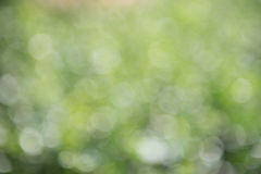 Fondo verde del bokeh, bokeh verde, extracto verde del bokeh Foto de archivo libre de regalías