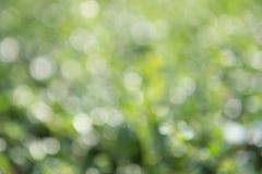 Fondo verde del bokeh, bokeh verde, extracto verde del bokeh Imagen de archivo