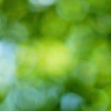 Fondo verde del bokeh di primavera Immagini Stock