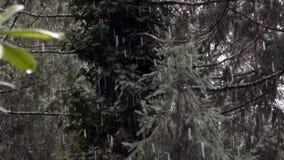 Fondo verde del bosque con la nieve que cae suavemente almacen de metraje de vídeo