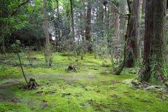 Fondo verde del bosque del musgo fotos de archivo