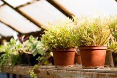 Fondo verde del cactus invernadero Jard?n bot?nico fotografía de archivo
