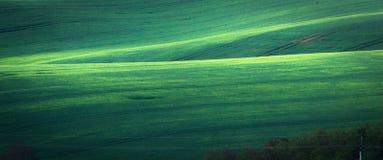 Fondo verde del extracto del campo de la primavera imagen de archivo