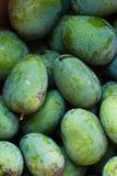 Fondo verde del mango Imágenes de archivo libres de regalías