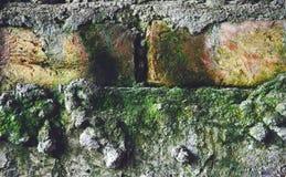 Fondo verde del mattone fotografia stock libera da diritti