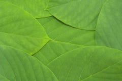 Fondo verde del modelo de la hoja Fotos de archivo