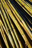 Fondo verde del modelo de la textura de la cosecha del bastón del río Fotos de archivo