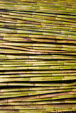 Fondo verde del modelo de la textura de la cosecha del bastón del río Foto de archivo libre de regalías
