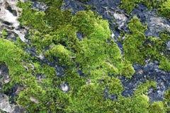 Fondo verde del MOS, piedra con el MOS verde fotografía de archivo