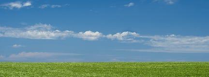 Fondo verde del paesaggio del campo con cielo blu Fotografia Stock