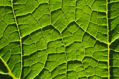 Fondo verde del primer de las fibras de la hoja Fotos de archivo