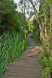 Fondo verde del treesd de la naturaleza de la trayectoria del jardín del bosque foto de archivo